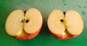 Cortamos las manzanas por la mitad